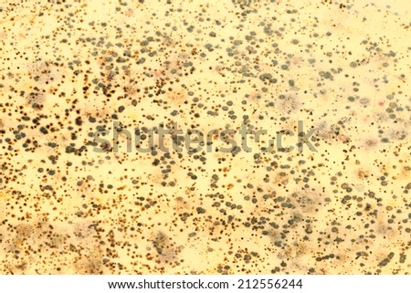 Close up fungus on the yellow surface background.  - stock photo