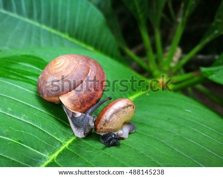 Close up of cute snail in the garden on green leaf