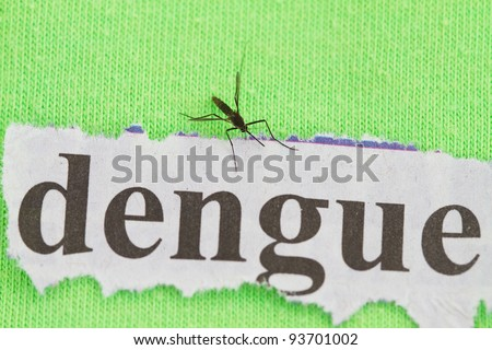 close up on a mosquito  with dengue cutout background - stock photo