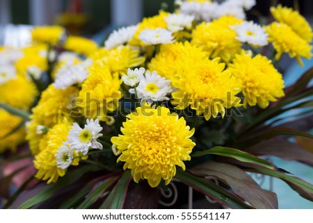 close up yellow chrysanthemums