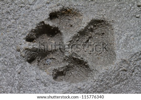 Closeup footprints on cement floor background