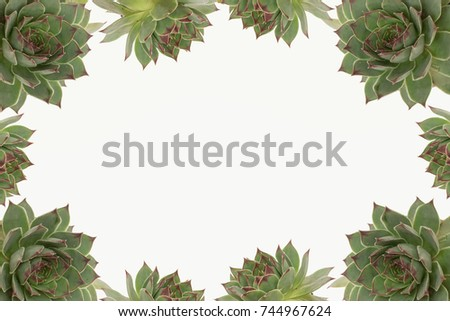 succulent names sempervivum houseleeks stock images royalty free images