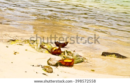 coconut on beach,coconut in water,coconut in sand,coconut in ocean ,ocean view,fruits on the beach,yellow fruits,fresh fruits,fruits in island,water sand coconut,coconuts,holiday,island view, island - stock photo