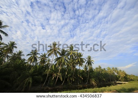 Coconut Palm Trees Against a Beautiful Tropical Sky