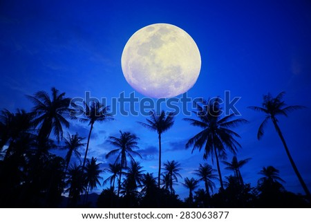 coconut tree with the moon