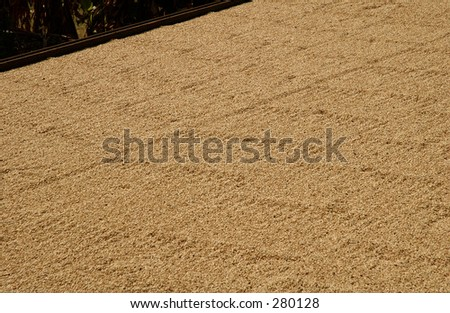 """Coffee beans drying out in the sun, Hawaii, (Keith Levit)"""