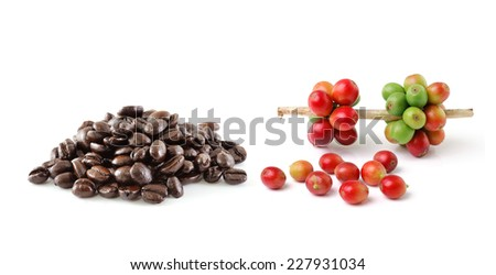 coffee beans isolated on white background - stock photo