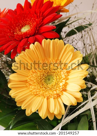 Colorful gerbera flowers  bouquet
