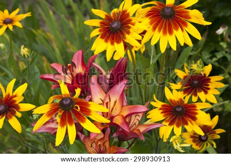 coneflower red lilies