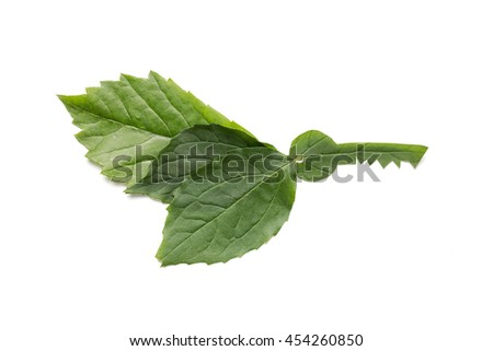 Conservation, environment, transport and ecology concept. Key to eco solutions. Keys made of green leaf. - stock photo