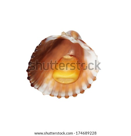 corn in shell isolated on white background - stock photo