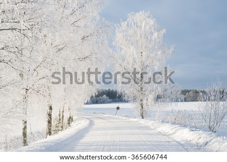 Country road in winter and tree branches covered with white frost