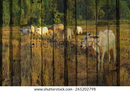 """""""cow"""" Mural. The wood painting concept - stock photo"""