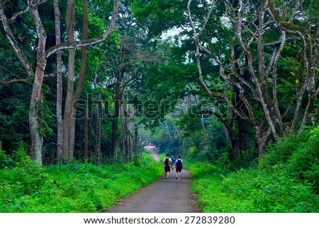 Cuc Phuong National Park in Ninh Binh, Vietnam  - stock photo