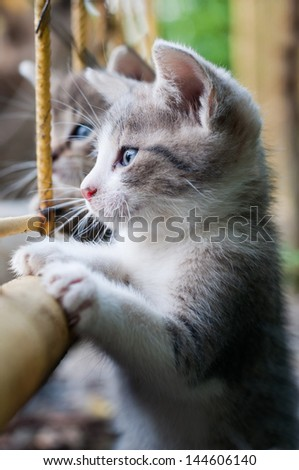 curious young kitten - stock photo