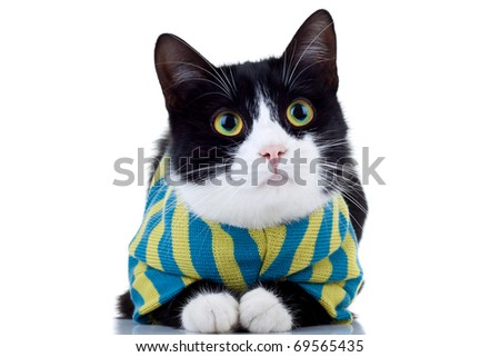 cute black and white cat wearing clothes over white