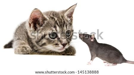 cute little kitten and a rat - stock photo