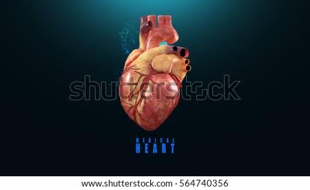 3 D Anatomy Human Heart Stock Illustration 564740356 - Shutterstock
