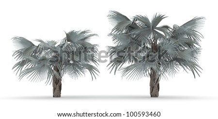 3d Bismark Palm isolated over white - stock photo