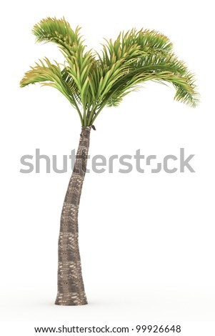 3d  coconut  tree  isolated over white - stock photo
