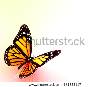 3d colorful butterflies on isolated background