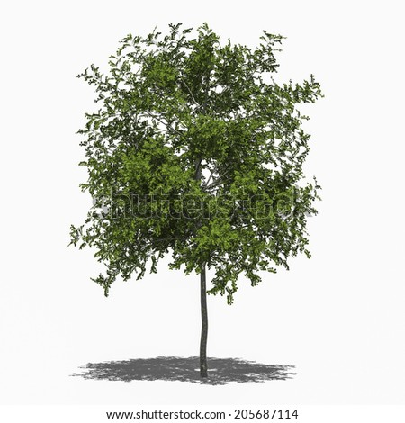 3D computer rendered illustration Robinia pseudoacacia Umbraculifera summer