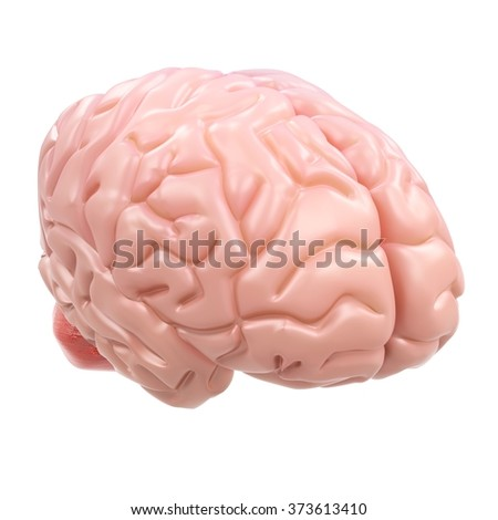 3d detailed brain isolated on white background - stock photo