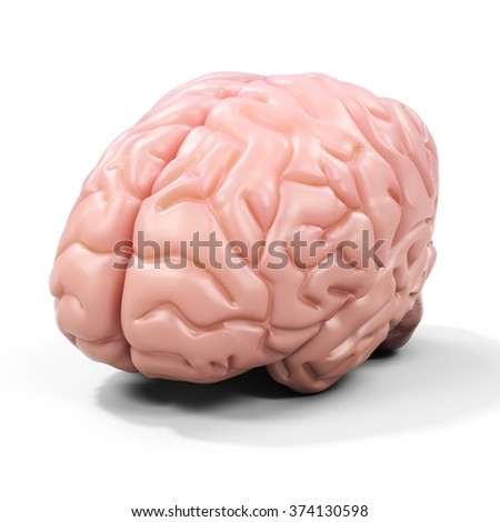 3d detailed brain on white background - stock photo