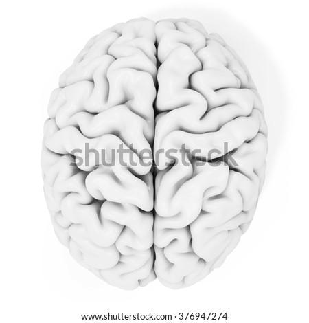 3d detailed brain on white background - stock photo