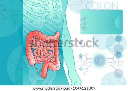 3d diagram illustration human colon internal stock illustration 3d diagram illustration of the human colon internal organs digestive system template anatomical ccuart Image collections