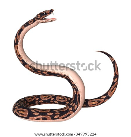 3D digital render of a ball python snake isolated on white background