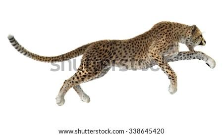 3D digital render of a big cat cheetah hunting isolated on white background - stock photo