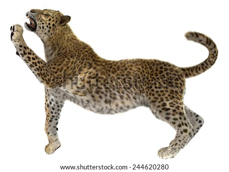 3D digital render of a big cat leopard or panthera pardus isolated on white background