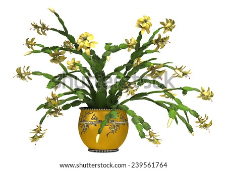 3D digital render of a Christmas cactus in a flower pot isolated on white background - stock photo