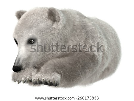 3D digital render of a cute polar bear isolated on white background