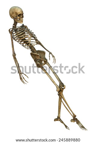 3D digital render of a human skeleton isolated on white background - stock photo