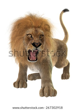 3D digital render of a hunting male lion isolated on white background - stock photo