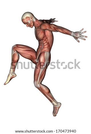 3D digital render of a jumping male anatomy figure with muscles map isolated on white background