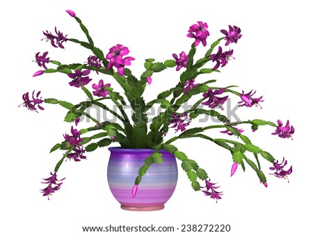 3D digital render of a purple Christmas cactus in a flower pot isolated on white background - stock photo