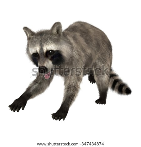 3D digital render of a raccoon isolated on white background