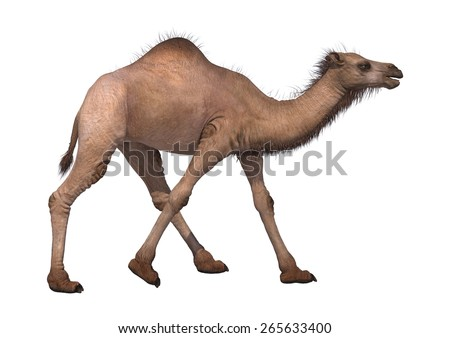 3D digital render of a running camel isolated on white background
