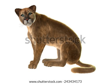 3D digital render of a sitting puma, also known as a cougar, mountain lion, or catamount, isolated on white background