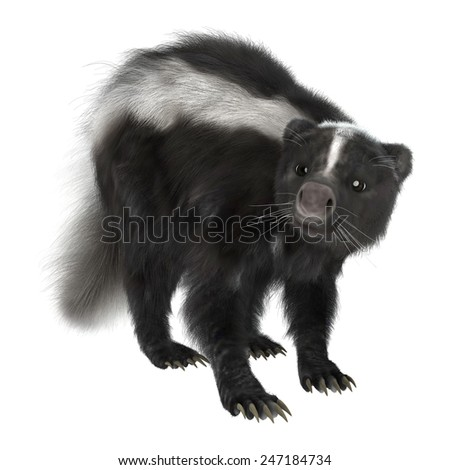 3D digital render of a skunk isolated on white background - stock photo