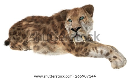 3D digital render of a smilodon or a resting saber toothed cat isolated on white background