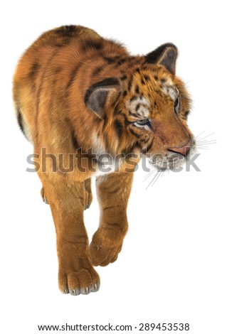3D digital render of a tiger walking isolated on white background
