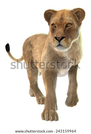 3D digital render of a walking lioness looking up isolated on white background - stock photo