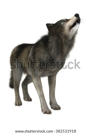 3D digital render of a wild wolf howling isolated on white background