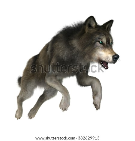 3D digital render of a wild wolf jumping isolated on white background