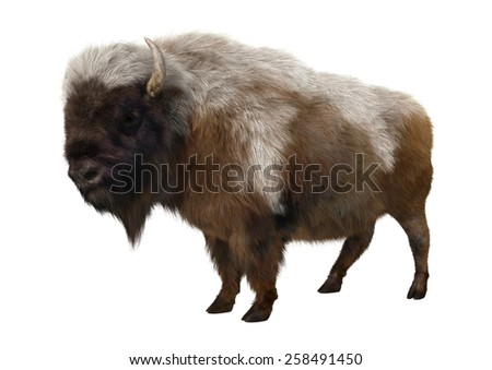 3D digital render of an American bison or American buffalo, a North American species of bison, isolated on white background - stock photo