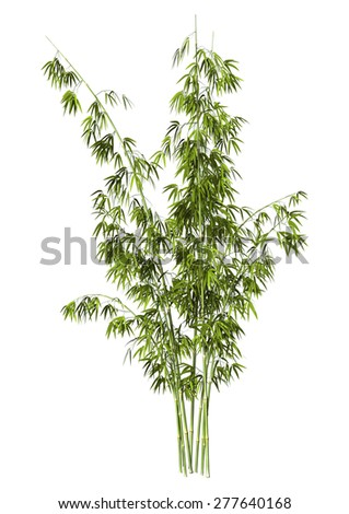 3D digital render of green bamboo trees isolated on white background - stock photo